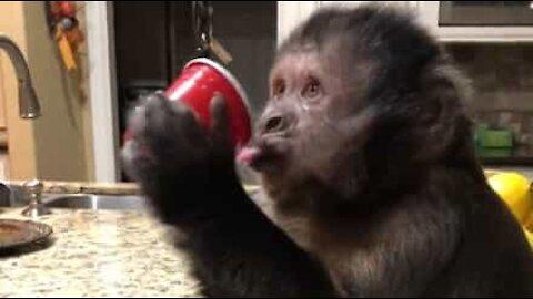 Macaco adora 7Up!