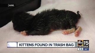 Kittens found in trash bag