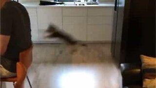 Ninja kitten's impressive jump