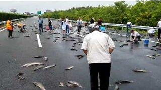 Bilførere fisker på en kinesisk motorvei