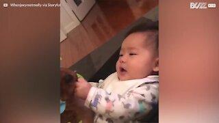 Una piccola cagnetta gioca nella sediolina con un bebè