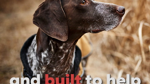 German Shorthaired Pointers Are Built for the Field!