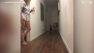 Gato não estava pronto para o susto que apanhou!