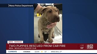 Puppies rescued from burning truck in Mesa