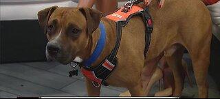 New Animal Rescue in Las Vegas