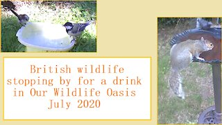 Stopping by for a drink at Our Wildlife Oasis - 18th-22nd July 2020