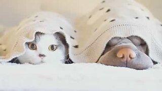 Cani e gatti sono migliori amici... a volte!