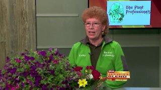 The Plant Professionals - 5/20/21