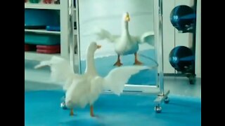Funny Duck Workout