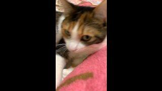 cat's playtime