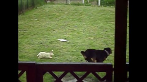 Dog Makes A Very Unusual Friend!