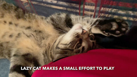 Lazy Cat Makes A Small Effort To Play