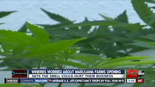 Wineries worried about marijuana farms opening, says the smell could hurt their business