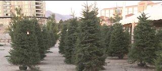 Demand for real Christmas trees rises despite pandemic