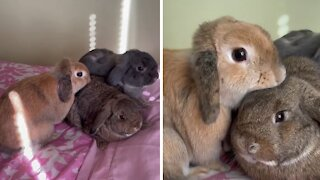 Mama bunny sees her baby after six months, has the sweetest reaction