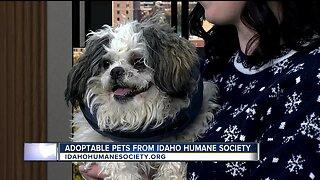 Idaho Humane Society: Hermey