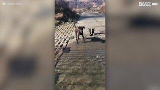 Cagnolina vede un fiume per la prima volta