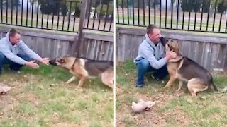 Emotional moment German Shepherd reunited with military owner