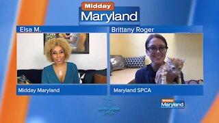 Maryland SPCA - Kitten Adoptions