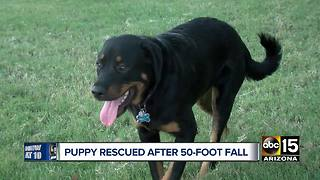 Puppy rescued after falling off cliff near Payson
