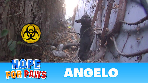 A homeless dog living in a trench next to a bio-hazard disposal company.