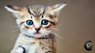The Most Adorable Kitten Compilation