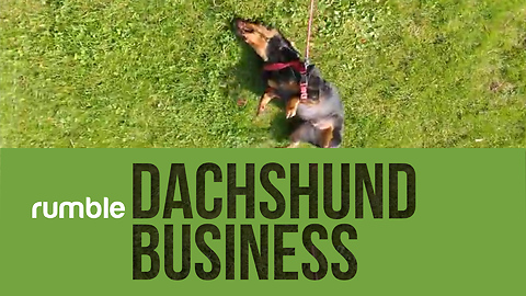 Dachshunds show how awesome they are in this cute & funny compilation!