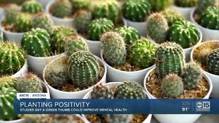 Studies say gardening can help with mental health