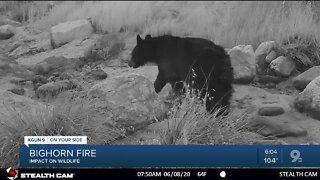 Wildfire and wild animals 6pm