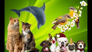 Try Not To Laugh watching Funny Animals compilation 2021