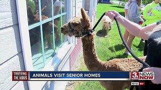 Animals Visit Senior Homes