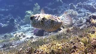 Scuba divers capture breathtaking footage in Dahab, Egypt