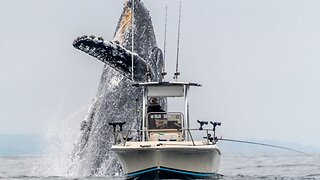 Whale Bursting Through The Waves