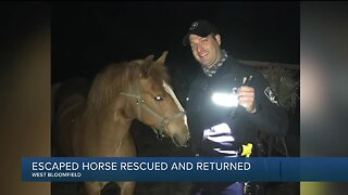West Bloomfield Police Department rescues horse on Middlebelt Road