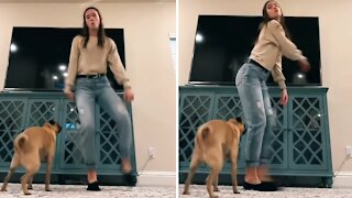 Dancing dog showing off his twerking skills