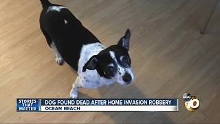 Dog found dead after home invasion robbery