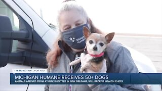 Michigan Humane Society receives 50 plus dogs