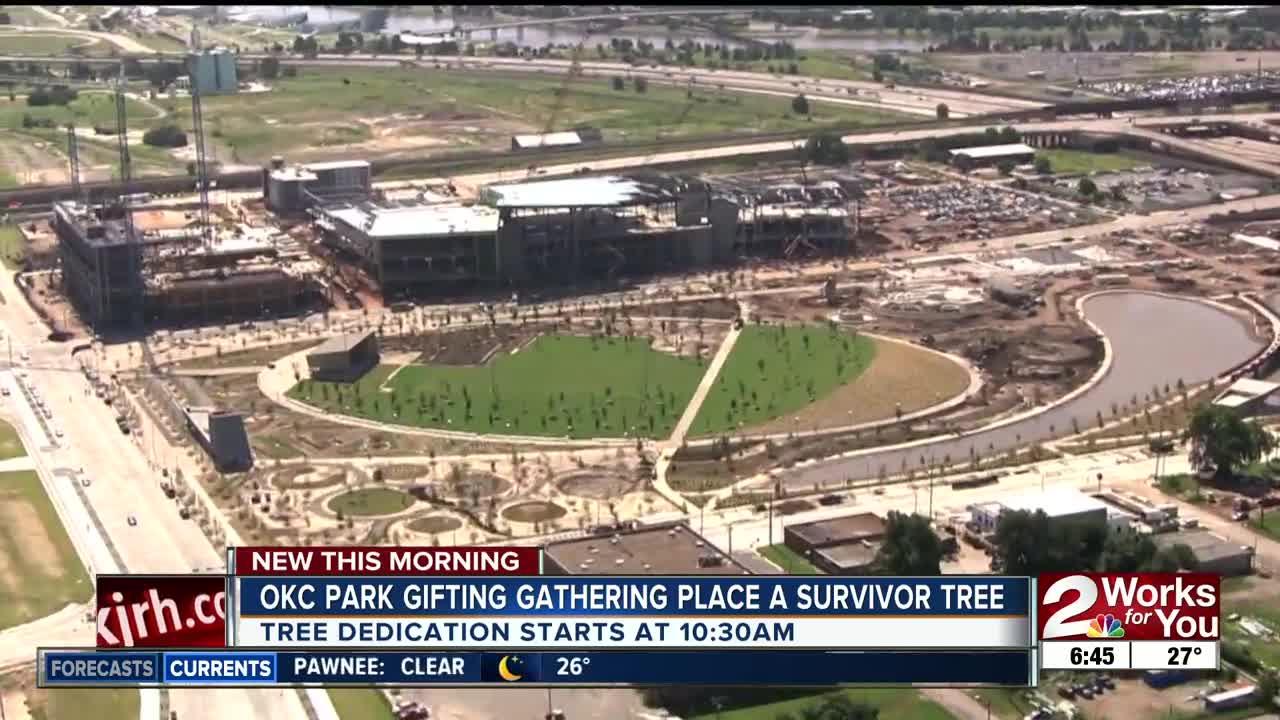 OKC park gifting Gathering Place a survivor tree