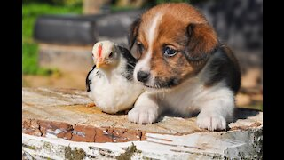 Funniest Moments Baby Meet Animals Life Funny Pets Video 2020-2021