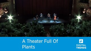 A Theater Full Of Plants!