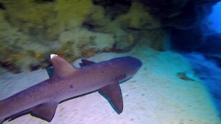Scuba divers find sleeping sharks and sea turtles in mysterious cave
