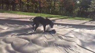 Hunder leker på en diger vannseng!