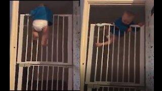 Baby ninja climbing like spider man