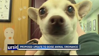Boise City Council member proposes change to city animal code