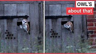 Photographer captures owl dancing