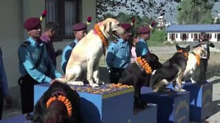 Nepalese police worship service dogs