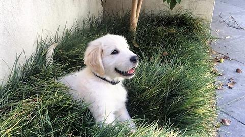 Cute Puppy destroying the garden