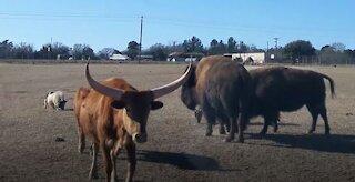 Grapeland Safari - A Hidden Texas Gem