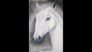 I Draw A Horse Drawing Black - White
