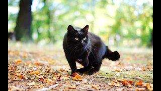 Friendly Black Cat in Cemetery